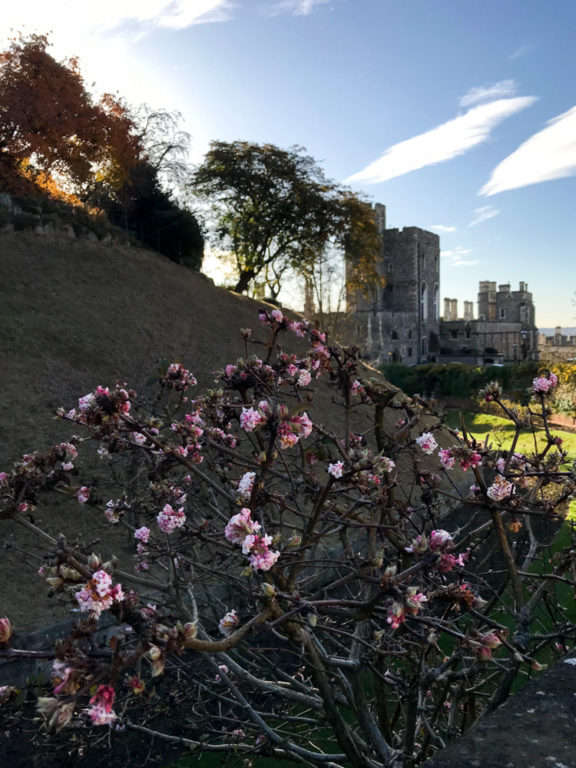 Windsor Castle by The Athenian Girl